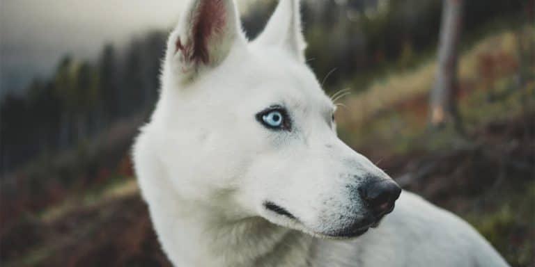 husky names